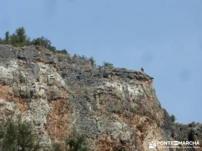 Cañones del Río Cega y  Santa Águeda  – Pedraza;senderismo wikipedia licencia de montaña